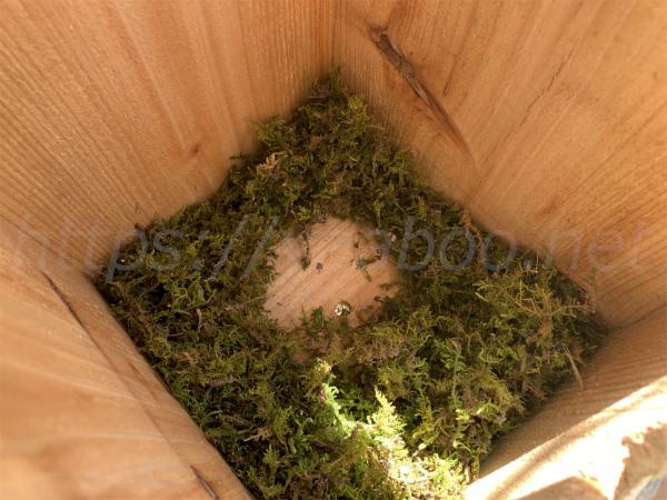 シジュウカラの営巣の巣箱の中