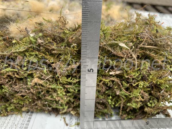 シジュウカラの巣箱の苔の厚み