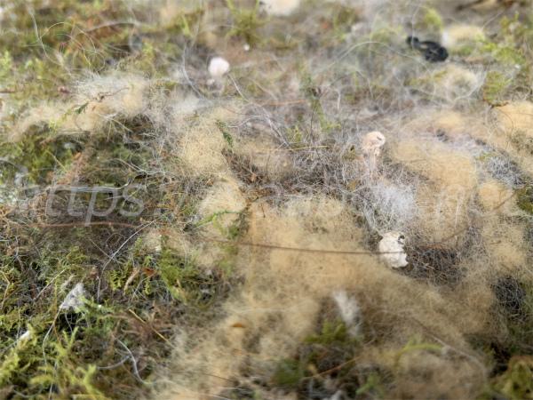 シジュウカラの巣箱の苔