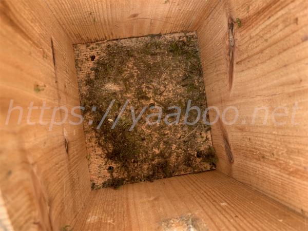 シジュウカラの巣箱のそうじ